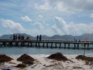 Schwimmen mit Delfinen auf Anguilla